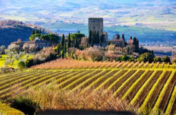 Pesquisa comprova que a música melhora a qualidade das uvas nos vinhedos de Montalcino, na Toscana italiana