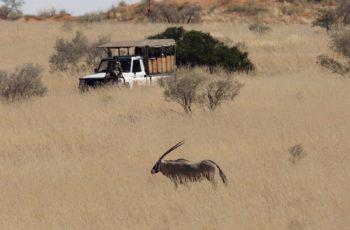 Safaris, a experiência da Vida Selvagem com Luxo e Mordomia na África do Sul
