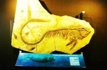 A aventura da vida nas vitrines criativas do Museu de História Natural de Genebra
