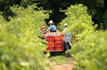 Acelerando a máquina: Brasil ultrapassa a barreira do consumo de 2,5 litros de vinho por ano, por pessoa. Será?